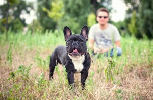 Kaufberatung Französische Bulldogge