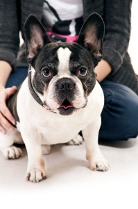 Forum Französische Bulldogge