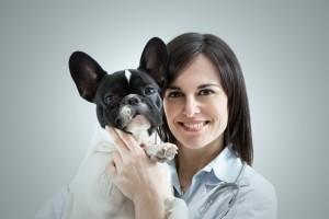 Französische Bulldogge kaufen
