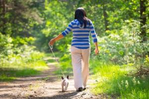 Spazieren gehen mit der Französischen Bulldogge