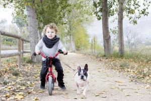 Französische Bulldogge mit Kind auf Fahrrad