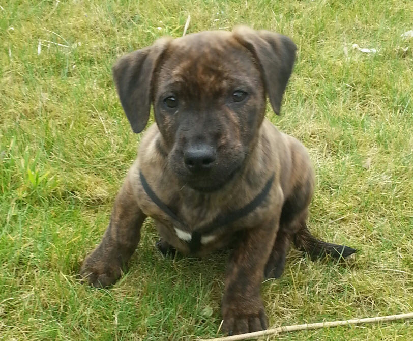 Terrier mix welpen abzugeben – Merry Dog Life photo blog