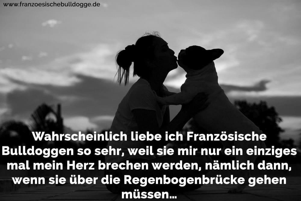 Franzosische Bulldogge Zitate Und Spruche