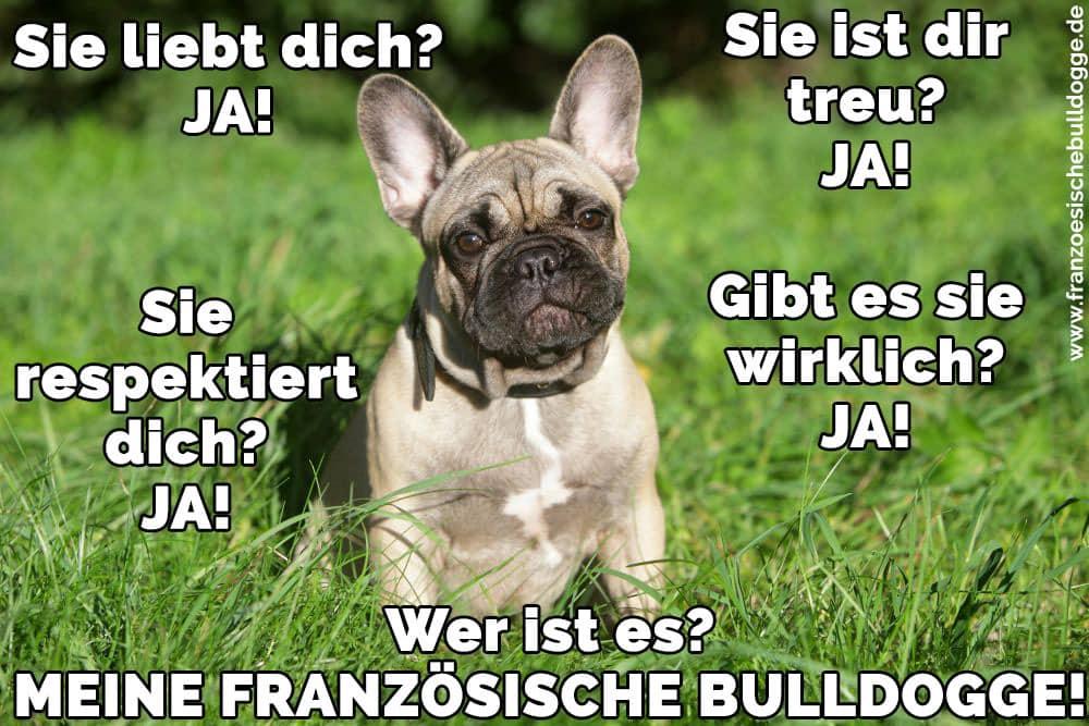 Französische Bulldogge im Gras