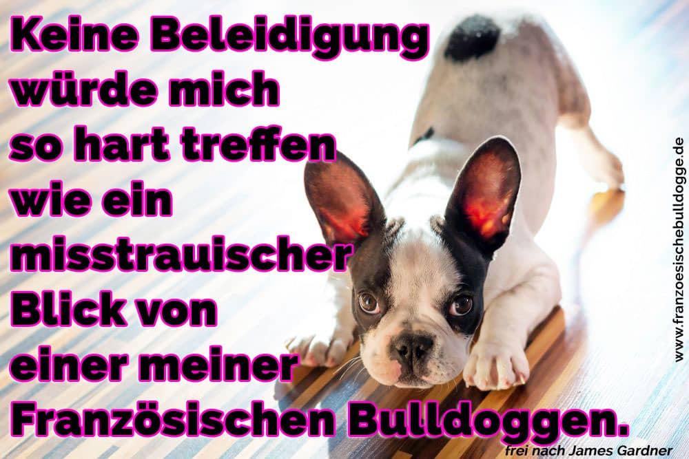 Eine 31/5000 Französisch Bulldog spielt auf dem Boden