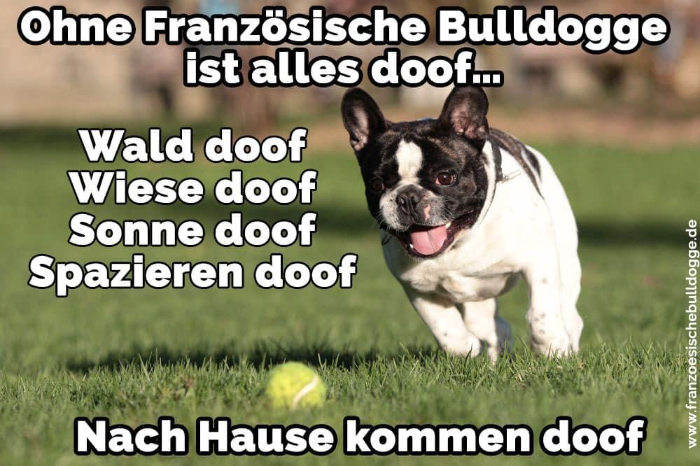 Französisch Bulldog im Gras spielt mit einem Ball