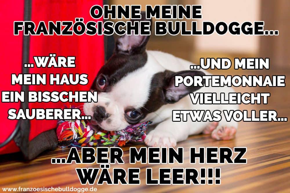 Eine traurige Bulldogge Französisch spielt auf dem Boden