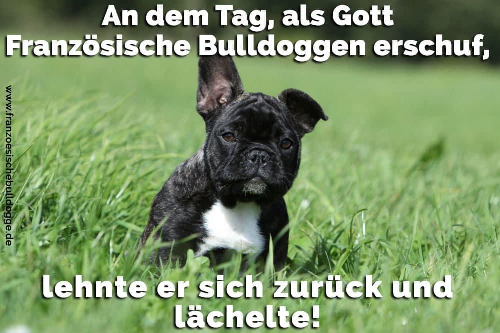 Eine Französische Bulldogge im Park