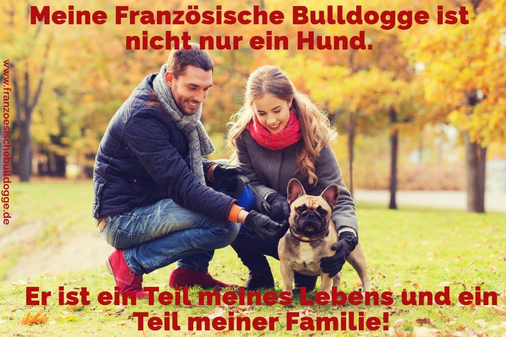 Eine Familie und ihr Französische Bulldogge
