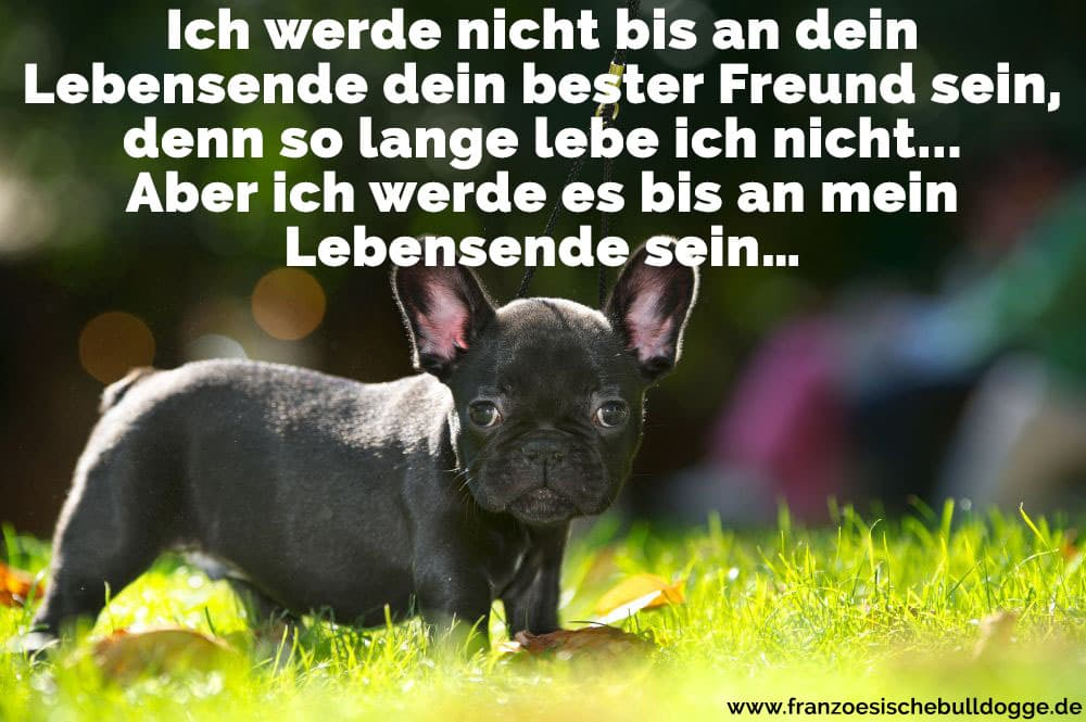 franz sische bulldogge zitate und spr che. Black Bedroom Furniture Sets. Home Design Ideas