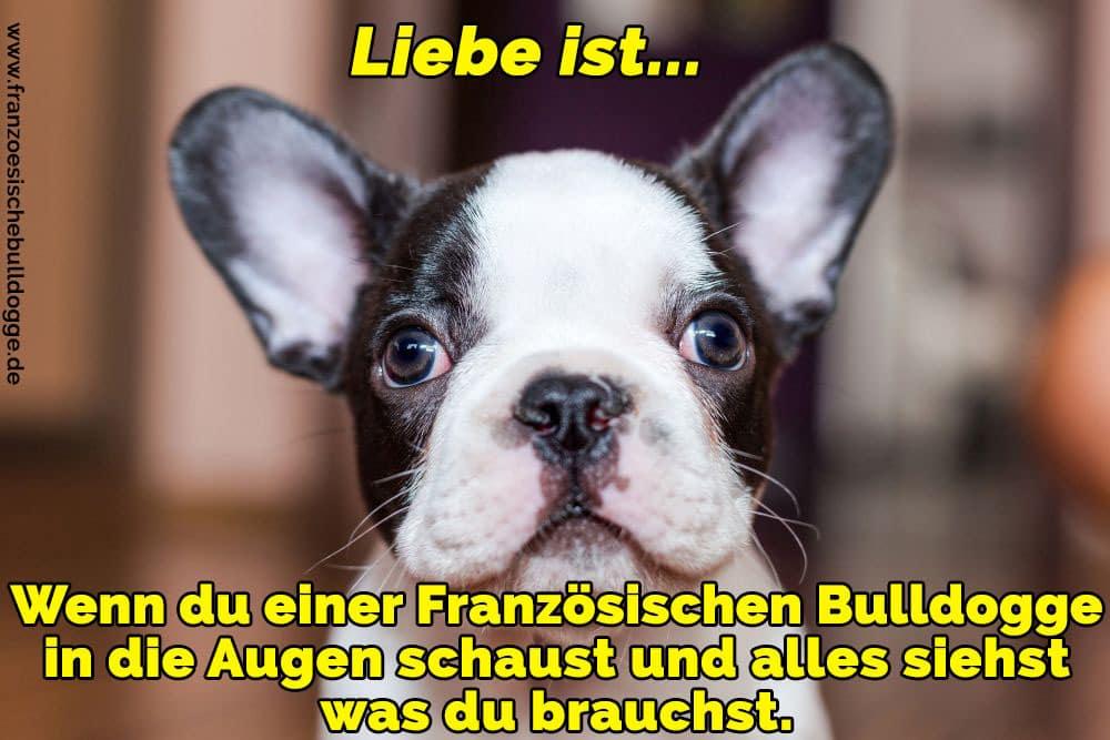 Ein Französisch Bulldog erschrocken