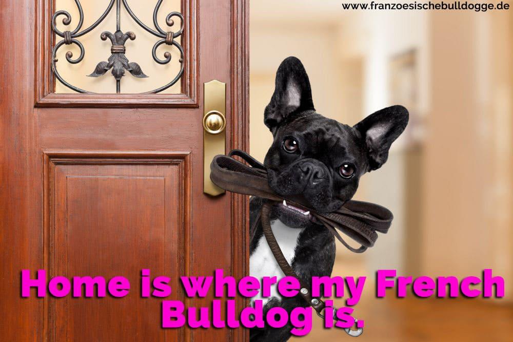 Eine Französisch Bulldog an der Tür