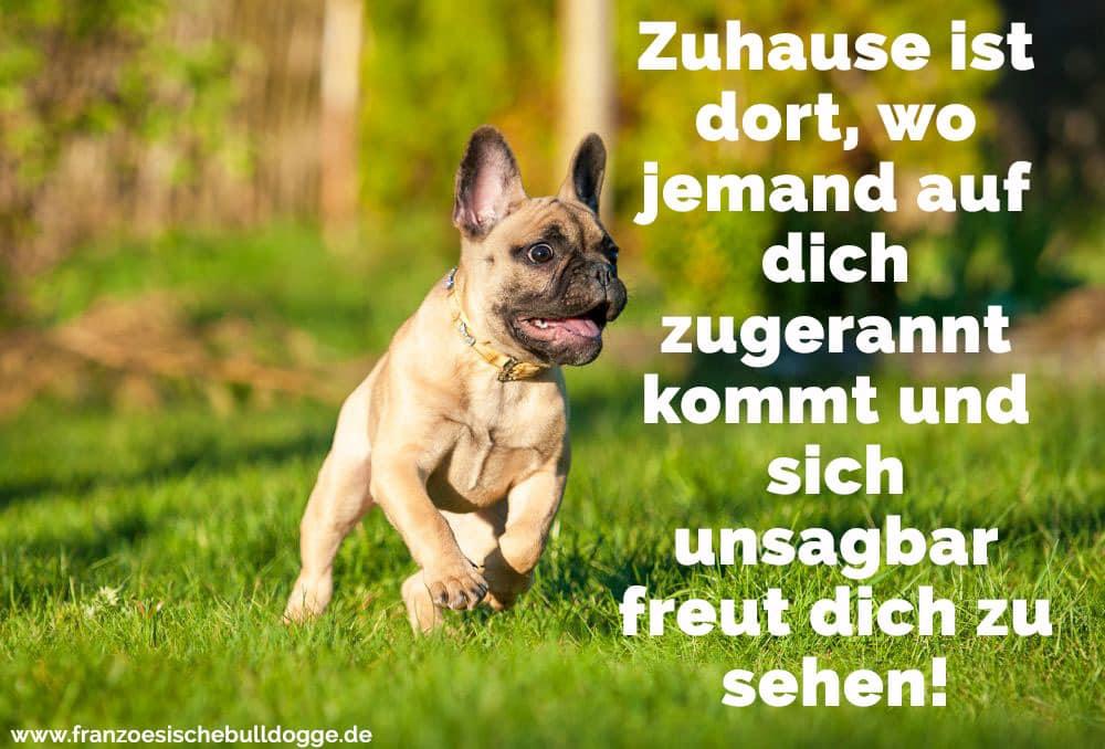 Eine Französische Bulldogge rennt im Garten