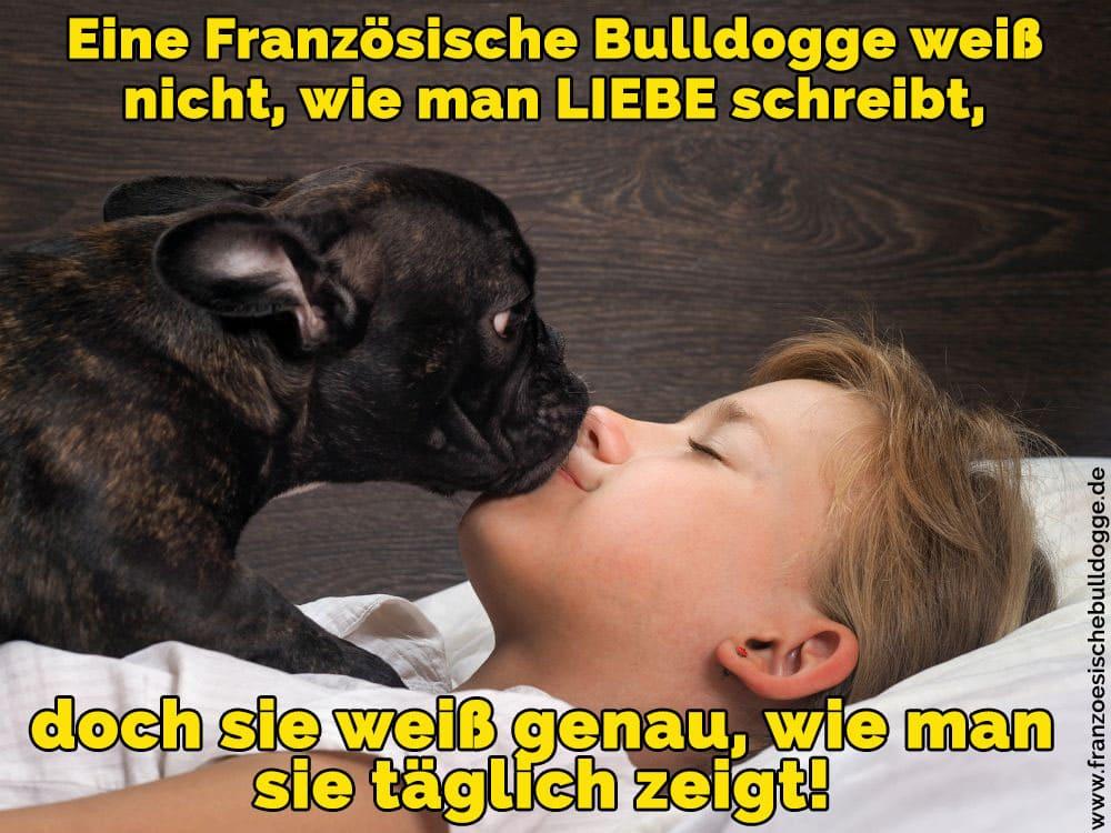 Ein Französisch Bulldogge einen Jungen küssen