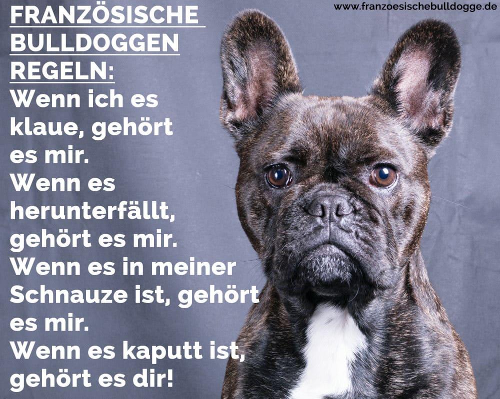 Achtung Französisch Bulldog