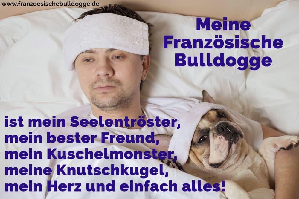 Ein Französisch Bulldog im Bett mit seinem Besitzer