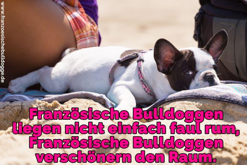 Eine Französische Bulldogge am Strand