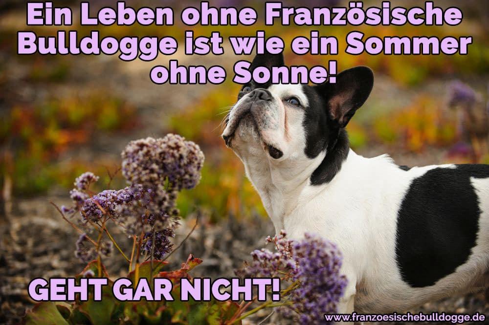Französische Bulldogge in Blumen