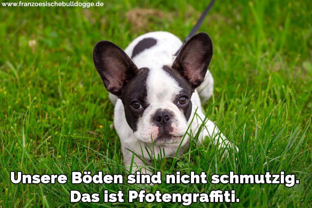 Eine Französische Bulldogge im Gras