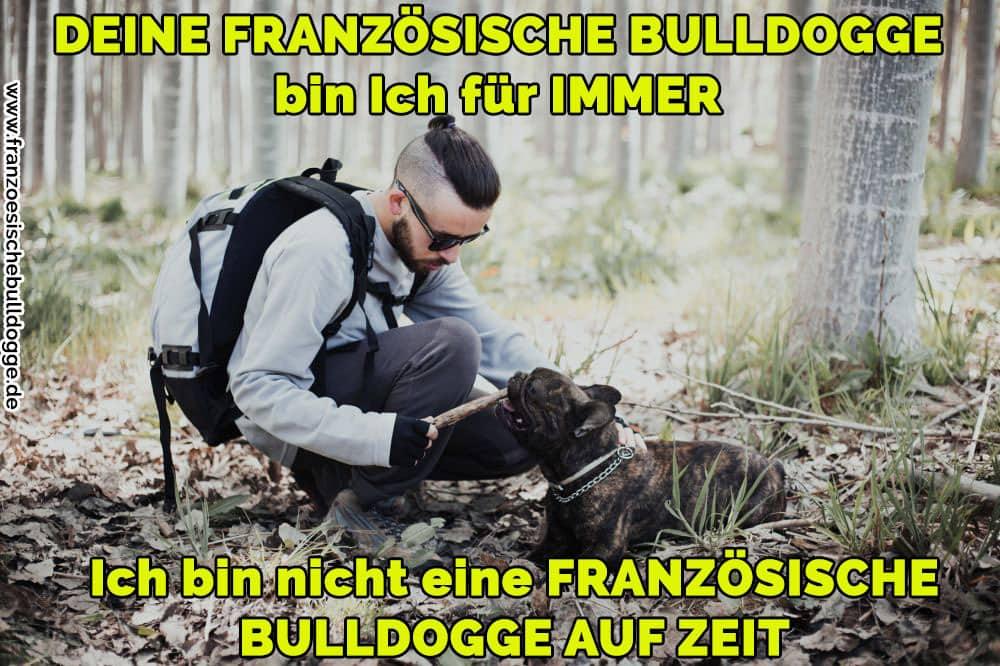Ein Mann streichelt ihr Französische Bulldog