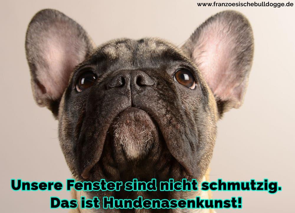 Ein trauriges Französische Bulldog