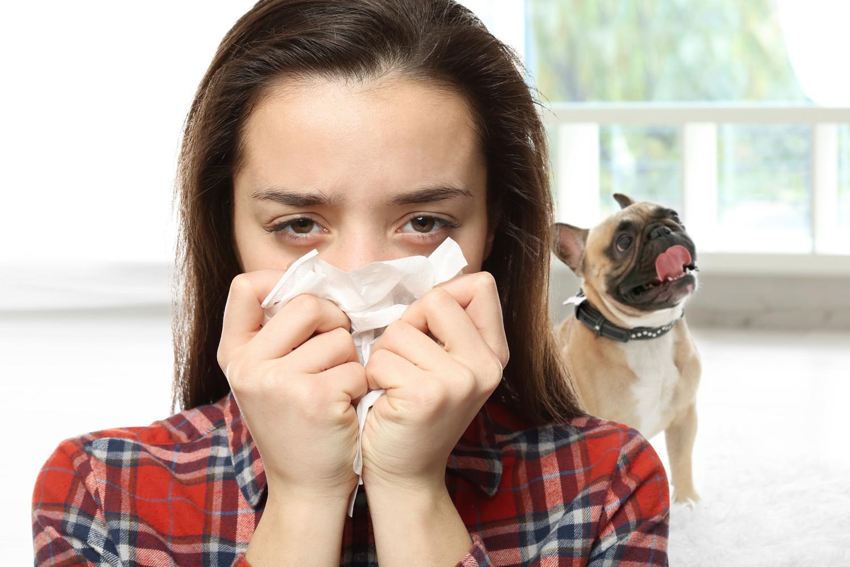 Ist die Französische Bulldogge für Allergiker geeignet?