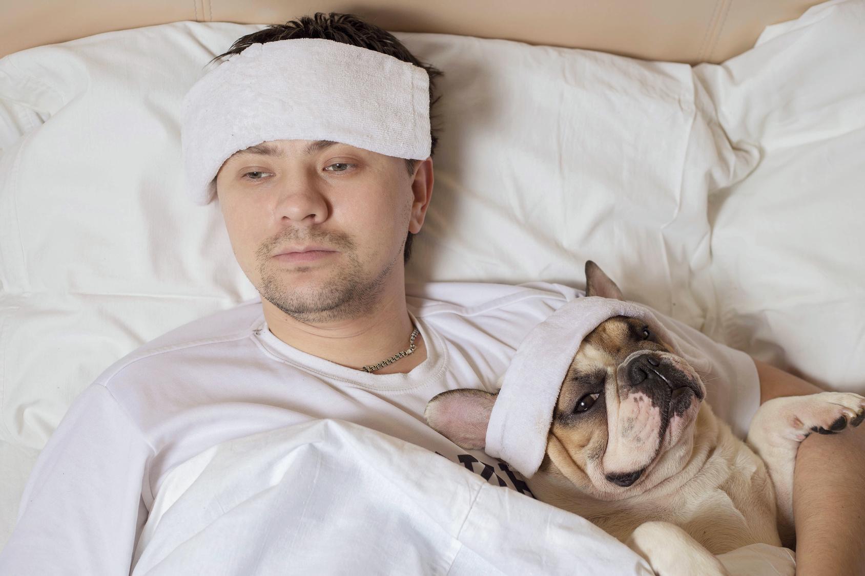 Sind Französische Bulldoggen krankheitsanfällig?