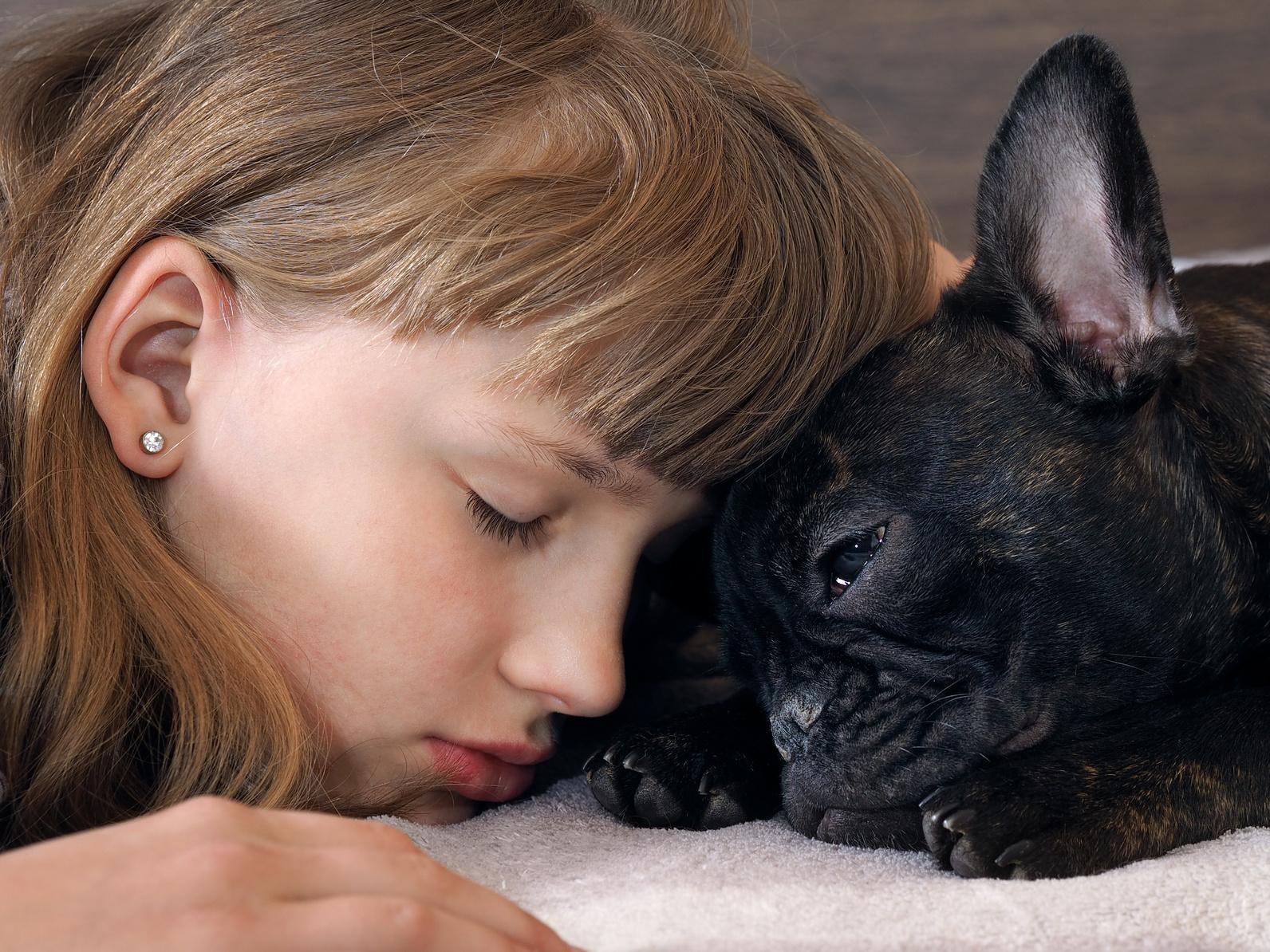 Verstehen sich Französische Bulldogge mit Kindern?