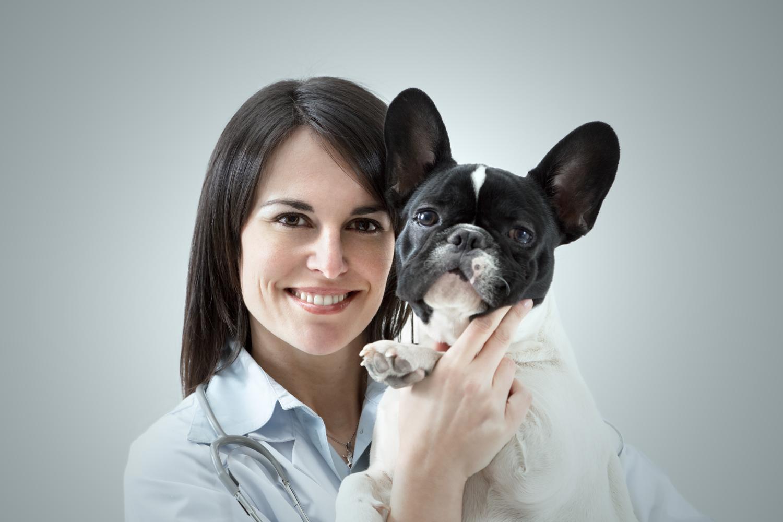 Was essen Französische Bulldoggen?