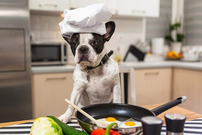 Welches Futter Französische Bulldogge