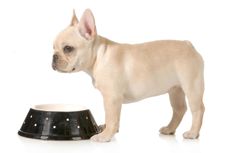 Welches Futter für Französische Bulldogge Welpen?