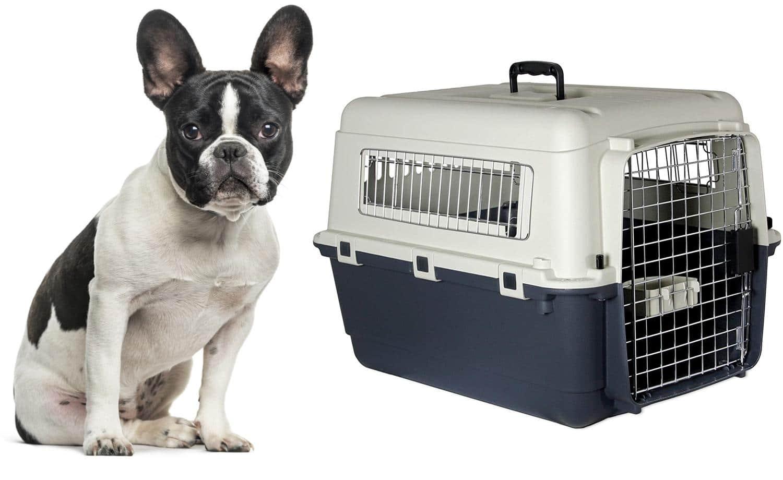 Welches ist die passende Hundebox für meine Französische Bulldogge?