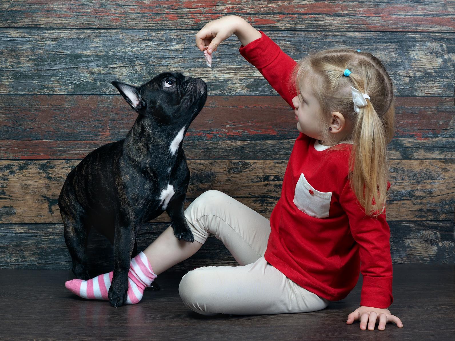 Wie intelligent sind Französische Bulldoggen?