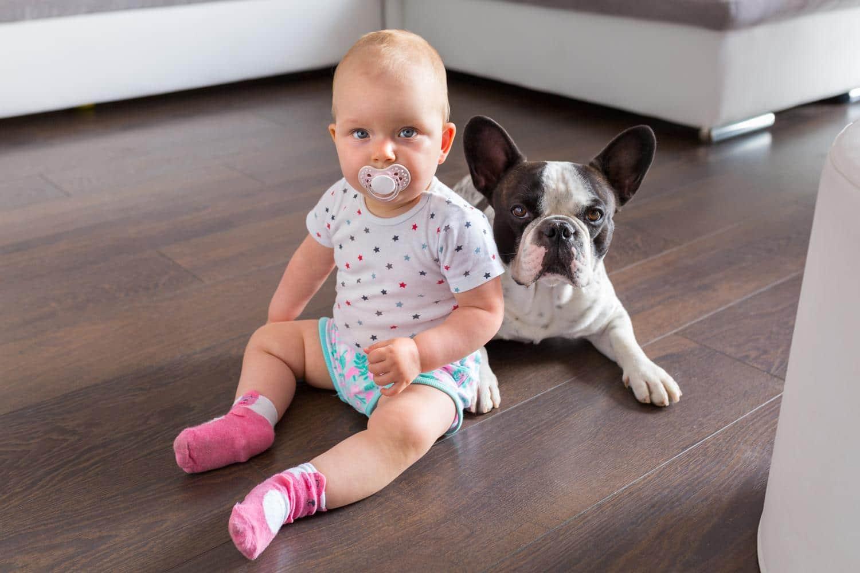 Wie kann ich die Französische Bulldogge an unser Baby gewöhnen?
