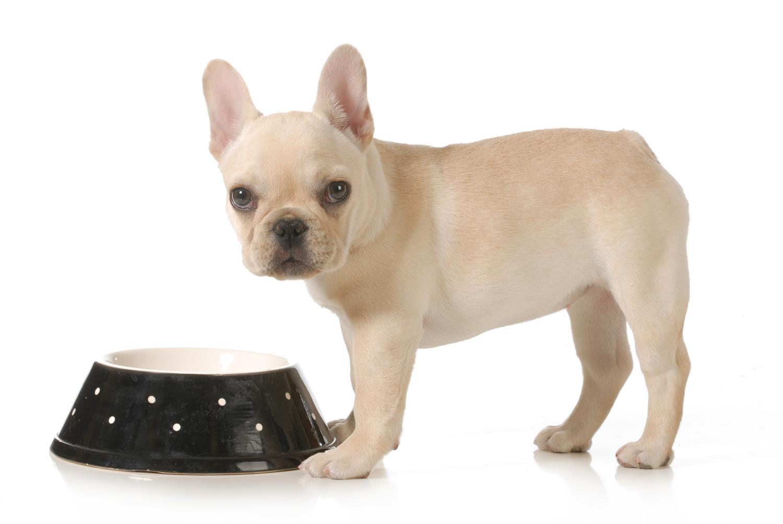 Wie lange benötigt die Französische Bulldogge Welpenfutter?