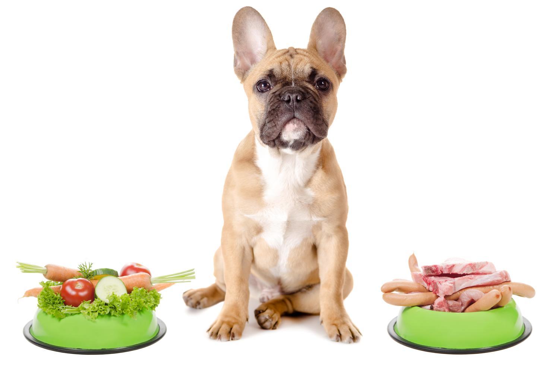 Wie viel darf eine Französische Bulldogge essen?