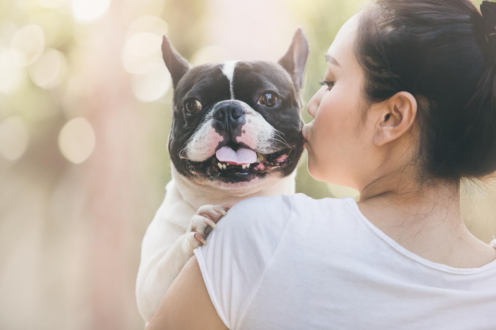 Wo gibt es eine Französische Bulldogge zu verschenken?